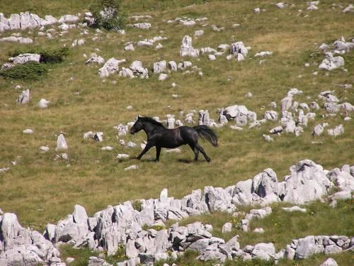 Sjeverni Velebit Kroatien