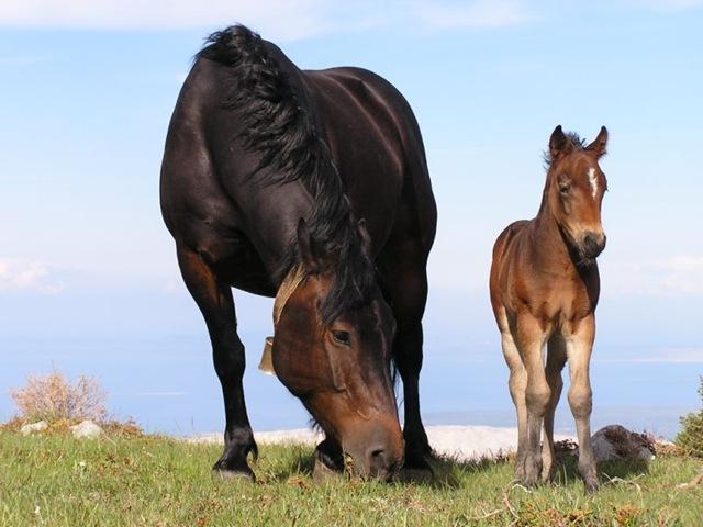 Nationalpark Velebit