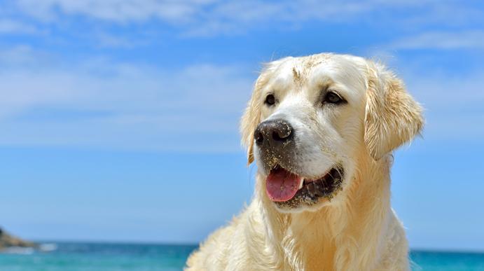 Hunde strande Kroatien