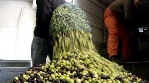 oliven-produktion